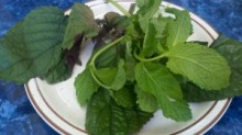 Two-Types-of-Fresh-Mint-Photo-by-Gourmet-Rambler-300x168